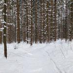 ski-2019-5