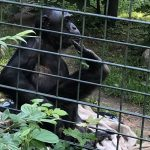 gts-zoo-2019-3