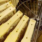 Bienen-AG-erster-Honig 2020-4