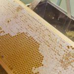 Bienen-AG-erster-Honig 2020-5